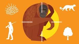 INFOGRAFIS: Jangan Bunuh Orangutan