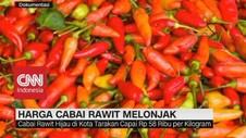Harga Cabai Rawit Melonjak
