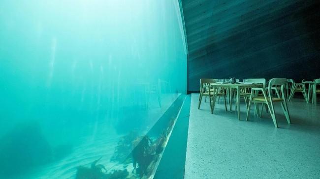 Ruang makan besar terletak di bawah dengan kapasitas 40 tamu. Ruangan itu dikelilingi oleh jendela raksasa yang memperlihatkan keindahan bawah laut. (NTB Scanpix/Tor Erik Schroder via REUTERS)