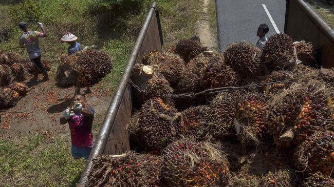 Harga Acuan Minyak Sawit November Turun Jadi US$571,3 per Ton