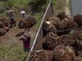 Dubes Uni Eropa Bantah Larangan Impor Sawit dari Indonesia
