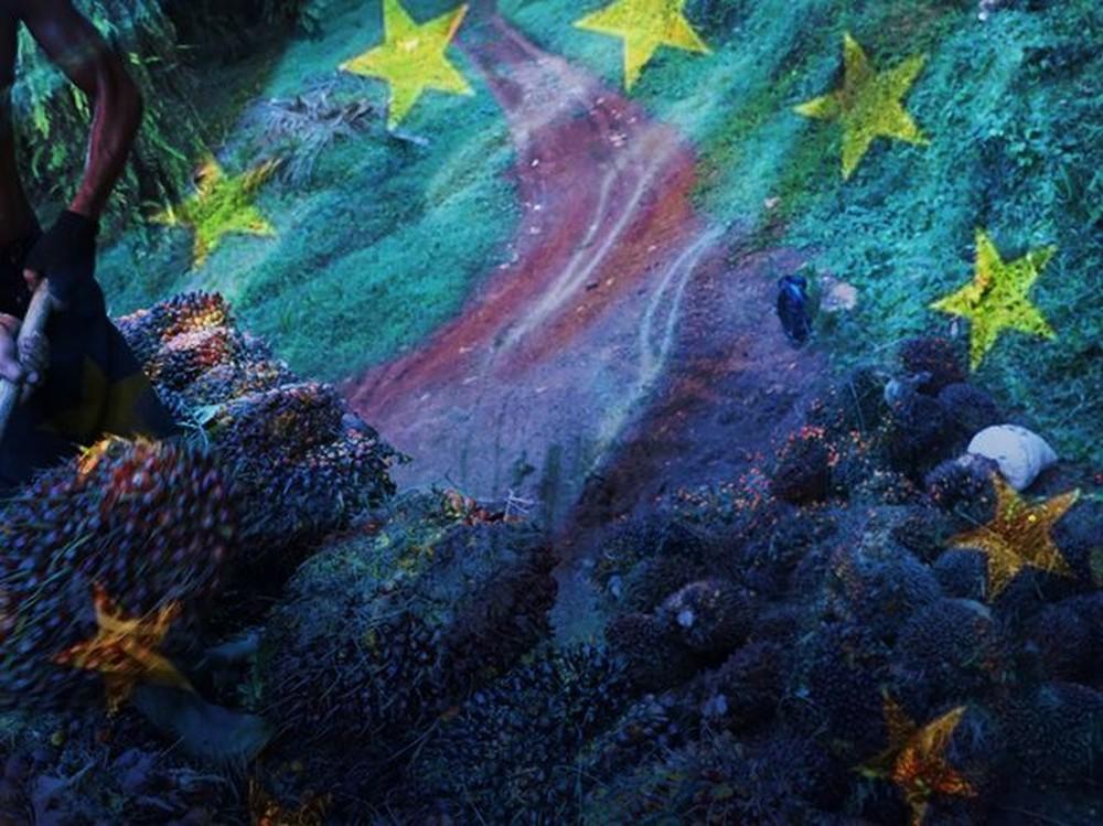 Sawit Didiskriminasi Eropa, RI Meradang!
