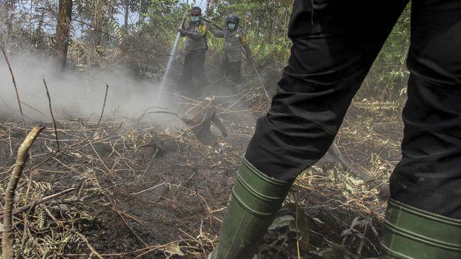 Jelang Musim Kemarau Bnpb Imbau Waspadai Kebakaran Hutan
