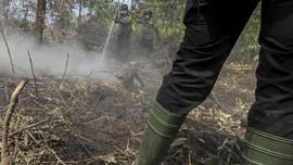 Jelang Musim Kemarau, BNPB Imbau Waspadai Kebakaran Hutan