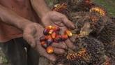 Presiden Joko Widodo menyarankan pelaku industri kelapa sawit masuk ke segmen hilir, seperti kosmetik dan olahan lain, demi meningkatkan nilai tambah. (AFP/Wahyudi).