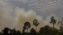 Lima Hektare Lahan di Tol Palindra Sumatra Terbakar