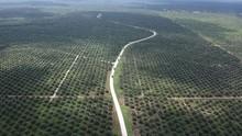 Perusahaan Terbuka Diduga Buka Kebun Sawit di Hutan Lindung