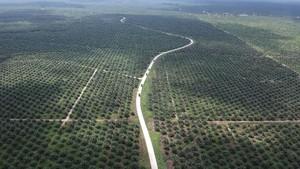 Pemkot Pekanbaru Akan Bebaskan 1.500 Ha Lahan untuk Sawit