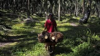 Indonesia Minta Inggris Tak Hambat Akses Pasar Kelapa Sawit