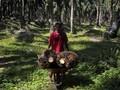 Petani Datangi Belanda Karena Tanah Dirampas Perusahaan Sawit