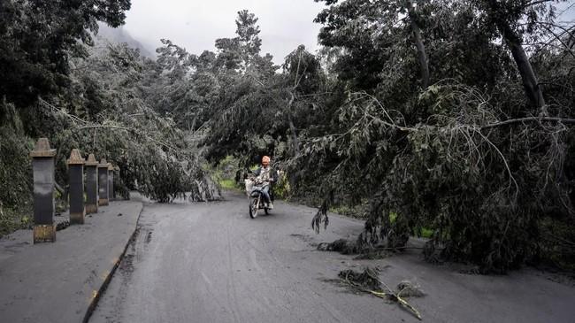 Pengendara motor melintas di jalur menuju kaldera Gunung Bromo yang terhalang pohon roboh di Ngadisari, Sukapura, Probolinggo, Jawa Timur, 19 Maret 2019. (ANTARA FOTO/Umarul Faruq)