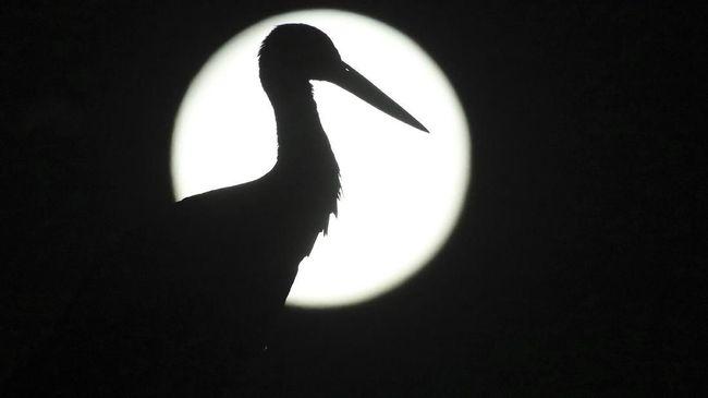 Harvest Moon, Micro Supermoon Terangi Langit Malam Ini