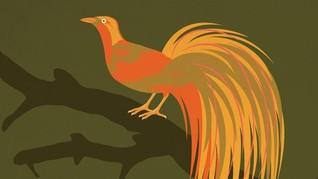 INFOGRAFIS: Fakta Menarik Burung Cendrawasih