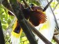 Hutan Warkesi, Wisata Alam Tersembunyi di Raja Ampat