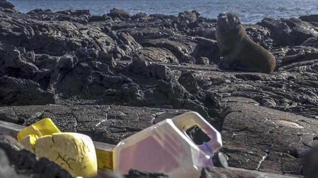 Kepulauan Galapagos adalah sebuah kepulauan yang terdiri dari 13 pulau-pulau berapi dan bebatuan. (Rodrigo BUENDIA / AFP)