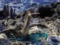 FOTO: Galapagos Diteror Sampah Plastik