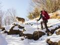 Tips Mendaki Bersama Anjing Peliharaan