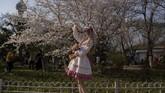Di tempat ini, wisatawan dapat menyaksikan sakura Somei-Yoshino yang terkenal di Jepang. (Nicolas ASFOURI / AFP)
