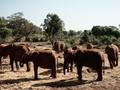 Tak Akan Ada Lagi Gajah Liar Afrika di Kebun Binatang Dunia