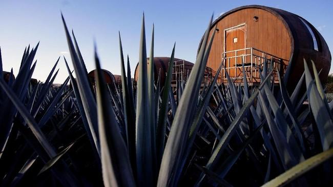 Undang-undang Meksiko menegaskan bahwa tequila hanya bisa dibuat di Jalisco dan daerah di Guanajuato, Michoacán, Nayarit, dan Tamaulipas.