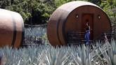Ada dua jenis tequila yakni yang berwarna bening (white tequila), dan tequila berwarna merah marun (maroon tequila).