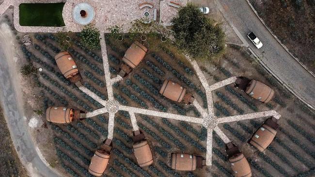 Tanah vulkanis di sekitar Tequila dianggap cukup baik bagi pertumbuhan agave biru, dan lebih dari 300 juta tanaman tersebut di panen setiap tahun.