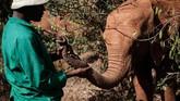 Namun pada akhir tahun lalu Kenya Wildlife Service (KWS) mencatat perburuan gajah berkurang 50 persen dari 80 kasus yang tercatat selama 2017.