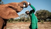 Layaknya mamalia lain, susu adalah hal yang penting untuk bayi gajah dalam masa pertumbuhan.
