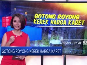 Gotong Royong Kerek Harga Karet