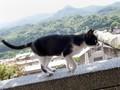 Houtong, Kota Kucing Menggemaskan di Taiwan