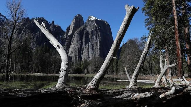 Sekitar 95 persen Taman Nasional Yosemite sengaja dijadikan kawasan liar, hingga kayu yang tumbang pun tidak boleh 'disenggol' karena bisa terkena denda.