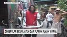 VIDEO: Geger Ular Besar Jatuh dari Plafon Rumah Warga