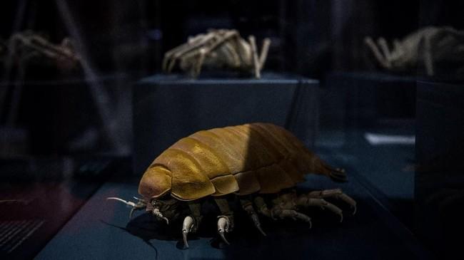 Crustacea ispoda raksasa ditampikan untuk pameran 'Lautan' di Museum Nasional Sejarah Alam. (Christophe ARCHAMBAULT / AFP)