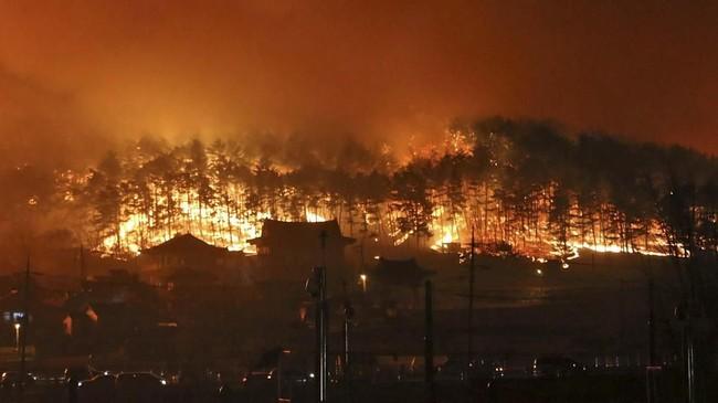 Kobaran api itu melalap 525 hektar lahan dan 198 rumah, gudang, dan bangunan lainnya. (Yonhap via Reuters)