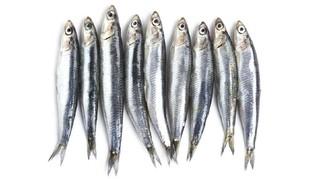 5 Manfaat Ikan Teri untuk Kesehatan