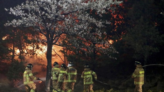 Sekitar empat ribu orang dievakuasi karena kebakaran lahan yang kian meluas di Korea Selatan pada Jumat (5/4). (Yonhap via Reuters)