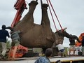VIDEO: Gajah Afrika Selatan Terbebas dari Hukuman Mati