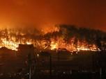 Kebakaran Hutan di Korea, Ribuan Orang Selamatkan Diri