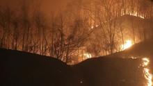 1000 Petugas Dikerahkan Atasi Kebakaran Hebat di Portugal