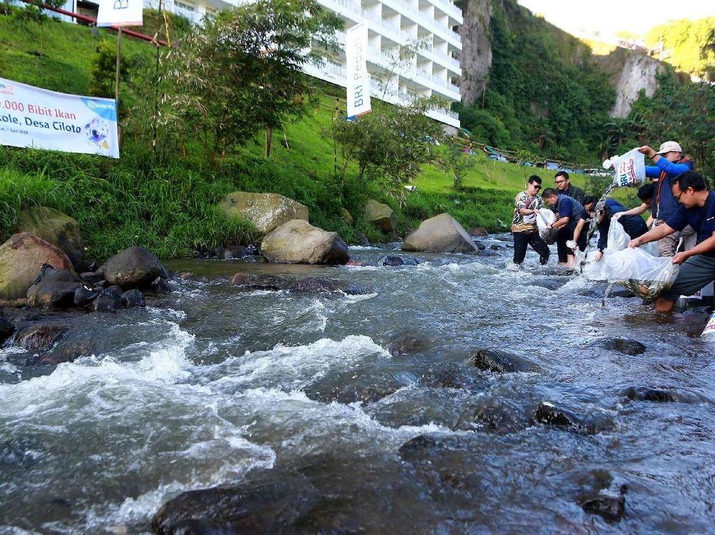 Pelepasan sebanyak 10.000 bibit ikan di aliran sungai Ciloto itu dilakukan dalam rangkaia kegiatan CSR Bank BRI untuk warga sekitar. Foto: dok. BRI