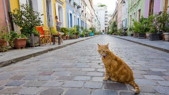 Warga 'Jalan Pastel' Paris Jengah Akan Kehadiran Turis