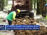 Aturan Sawit Uni Eropa Buat Galau Pengusaha Biofuel Eropa