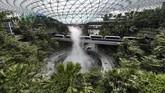 Lima tahun sejak mengumumkan rencana perluasan area, tahun ini pengelola Bandara Internasional Changi di Singapura mengumumkan bahwa Bandara Jewel Changi sebagai area komersil siap beroperasi pada pertengahan tahun ini. (Roslan RAHMAN / AFP)
