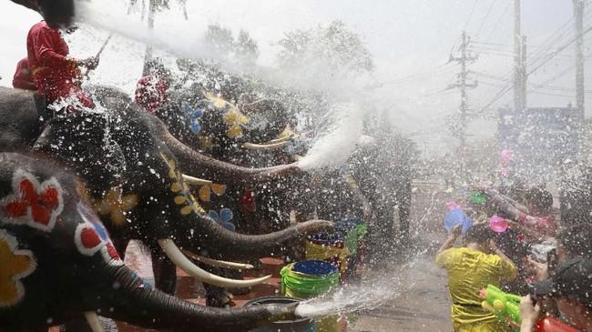 Namun kelompok perlindungan hewan mengkritik festival ini, karena menggunakan gajah yang dilatih secara paksa. (REUTERS/Soe Zeya Tun)