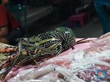 Vietnam Untung Besar Gegara Lobster RI, Singapura Juga
