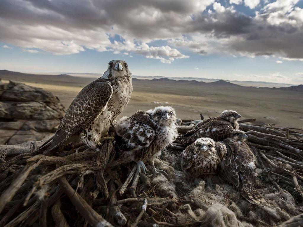 Juara 1 Nature, Stories. Fotografer: Brent Stirton. Foto: World Press Photo