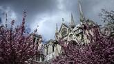 Gereja Notre Dame juga ramai didatangi turis saat musim semi, karena bunga-bunga yang tumbuh di sekitarnya mulai bermekaran. (Philippe LOPEZ / AFP)