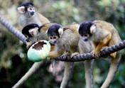 Unik! Hewan di Kebun Binatang London Dapat Telur Paskah