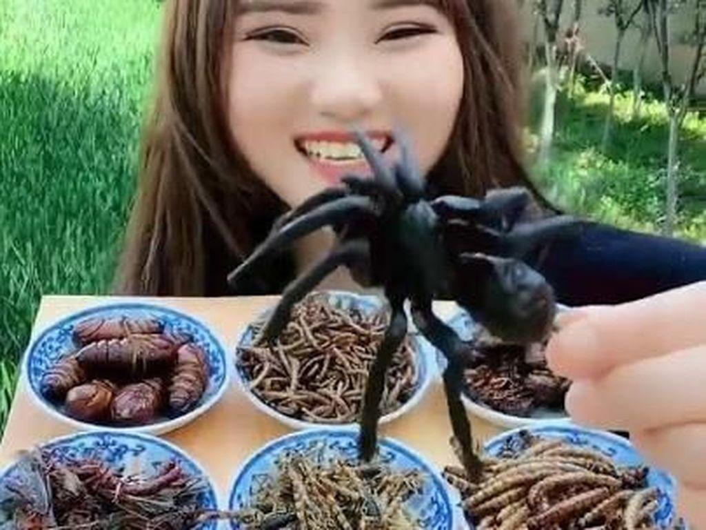 Hii Ngeri! Ratu Serangga Ini Santap 8 Jenis Serangga Sekaligus