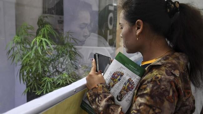 Seorang perempuan melihat tanaman ganja di balik jendela pada hari kedua festival ganja Pan Ram yang berlangsung di kota Buriram, 20 April 2019. (AFP/Lillian SUWANRUMPHA)
